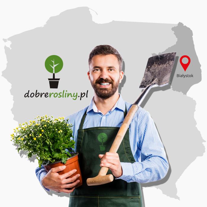 Dobre Rośliny - sadzonki, krzewy, drzewa | Łyski, Białystok